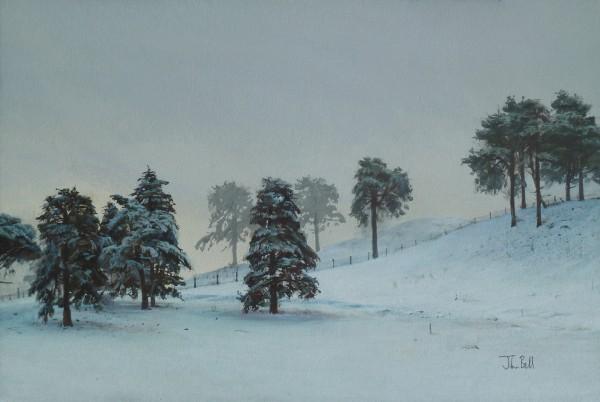 John Bell_Scots Pine, Hoole Hill,  nr Abernyte_Acrylic_12x18