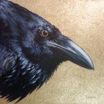Stanley Bird_Mortimer_Acrylics_5x5