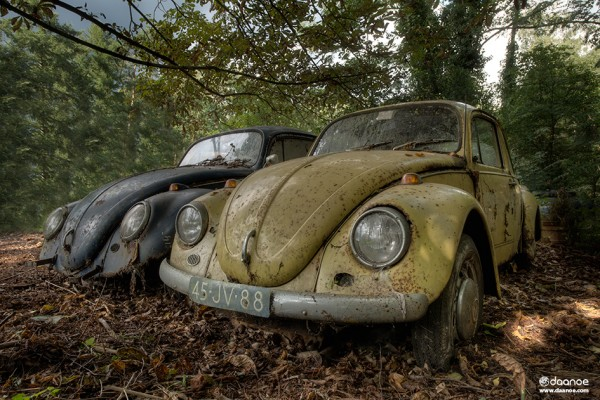 Daan Oude Elferink - Forgotten Beetles - EDITION 8