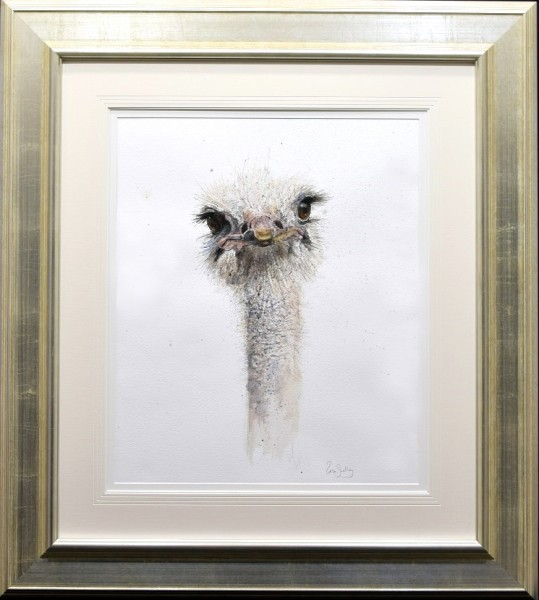 Zaza Shelley_Original_Watercolour_Ostrich_image 19 x 23_fmd 35 x 39