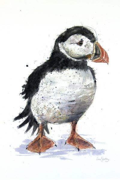Zaza Shelley_Original_Watercolour_Puffin_image 21 x 28