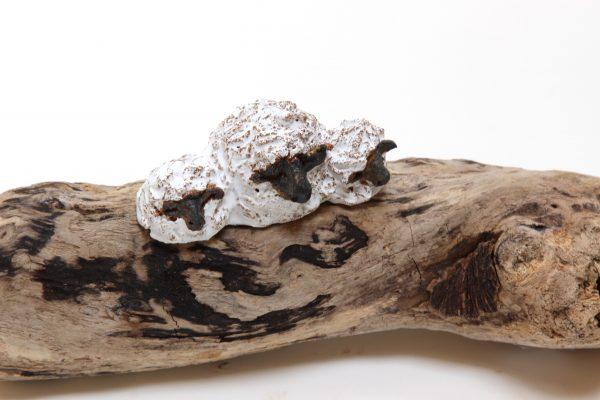 Jane Adams_Original_Ceramic on Driftwood_Sheep and Lambs_14x4 (3)